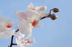 Orquideas exoticas