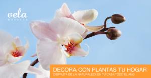 Como decorar tu casa con plantas de interior